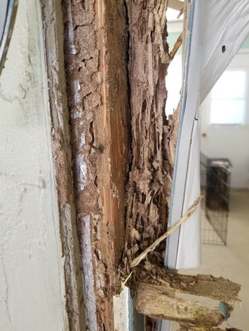 Termite Remediation Spring Hill FL